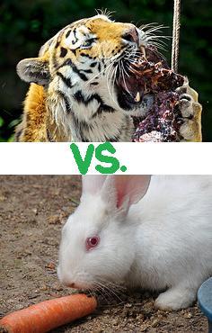 The Great Health Debate