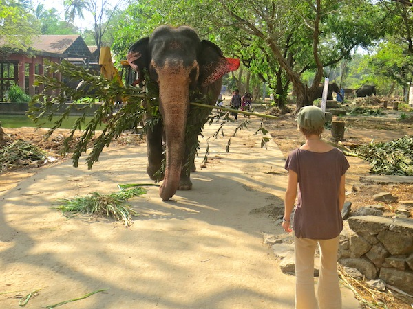 Elephants in the South